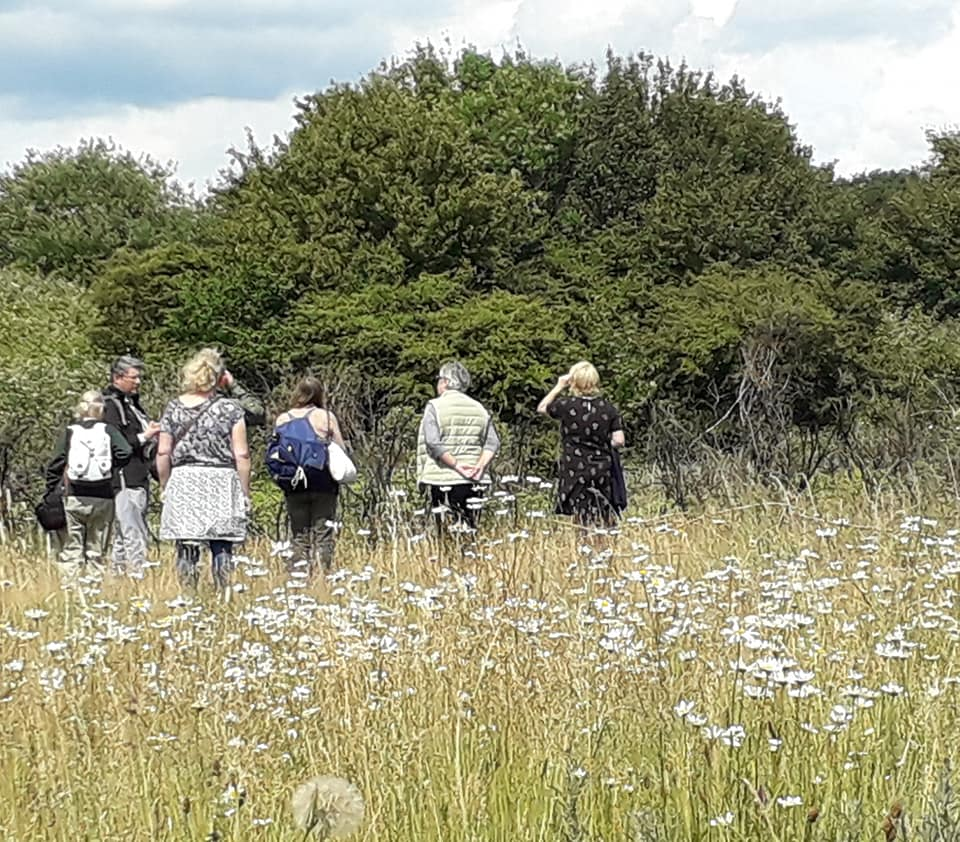 Peartree Green Guided Walk: Bugs