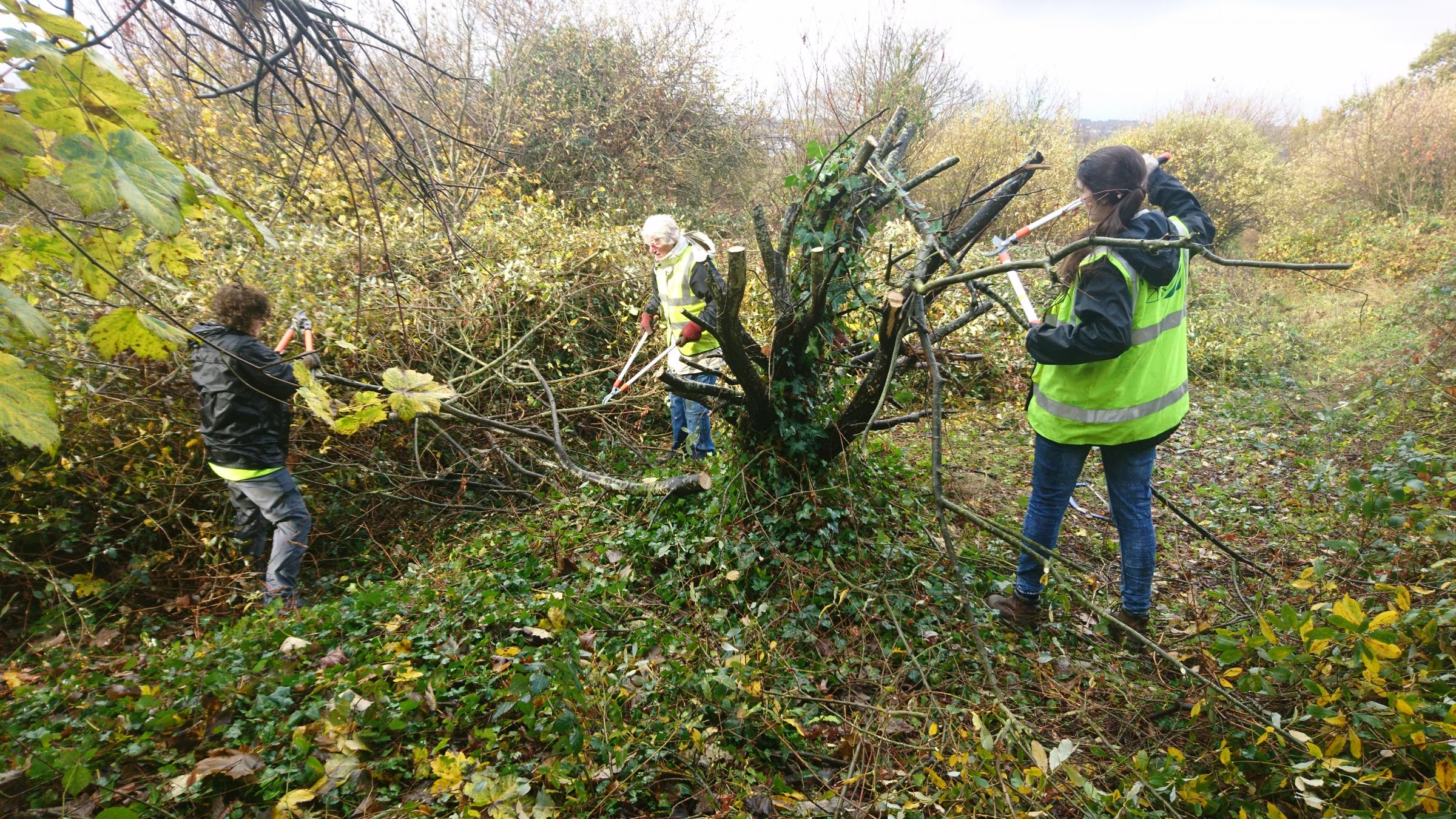 Peartree Green Conservation Team