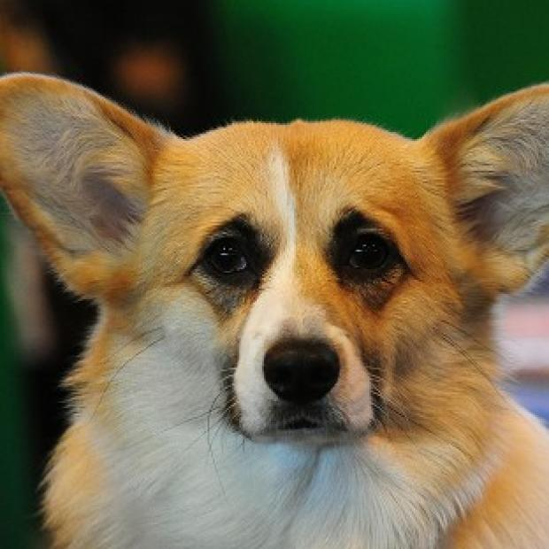 One of the Queen's corgis has died at the age of 13