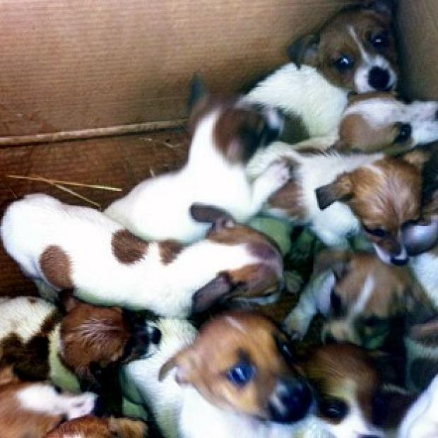 Hampshire Chronicle: A total of 50 puppies were found in two cars in Dublin (Garda/PA)