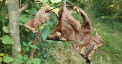 Hampshire still free of confirmed cases of ash dieback