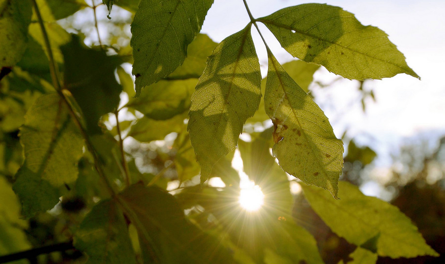 Ash dieback disease finally reaches Hampshire
