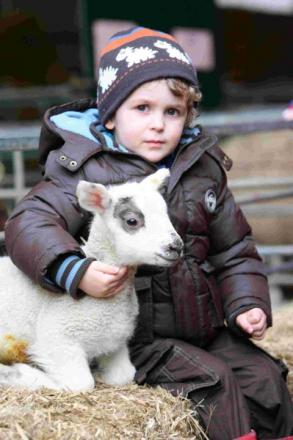 Noah Curtis with a new born lamb at the 2012 lambing weekend