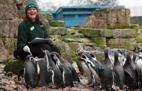 Registrar Debbie Pearson counts Marwell Wildlife's penguins for the annual audit