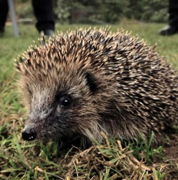 Spring's late arrival could affect wild creatures such as hedgehogs which hibernate, say conservationists