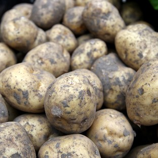 An investigation is under way after potatoes were stolen from a field in Norfolk