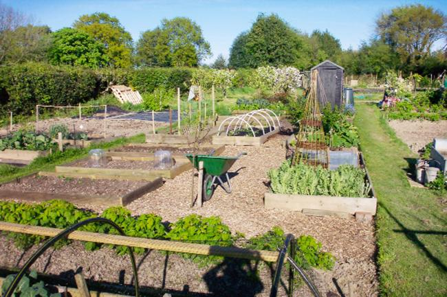 Green supporters call for more community gardening in Winchester