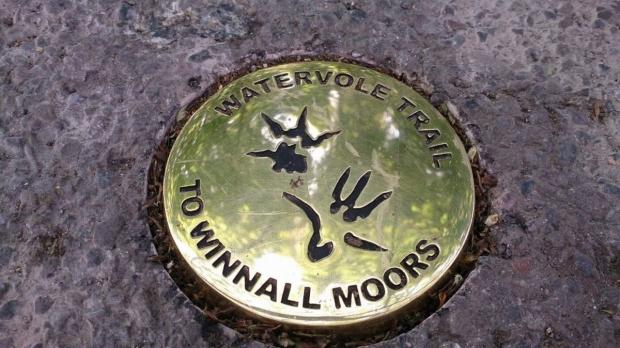New water vole trail marks completion of Winnall Moors project