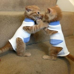 Kittens called George and Elton have been dressed in socks to stop them suckling on each other (RSPCA/PA