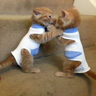 Kittens called George and Elton have been dressed in socks to stop them suckling on each other (RSPCA/PA)
