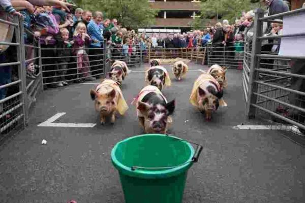 Last year the piglet racing drew large crowds.