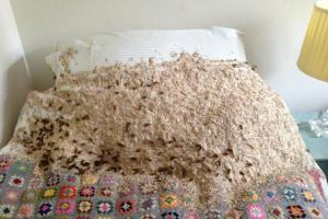 5,000 wasps found in Winchester bedroom