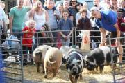 Piglet racing was the centrepiece of Hampshire Farmers' Market's British Food Fortnight celebrations.