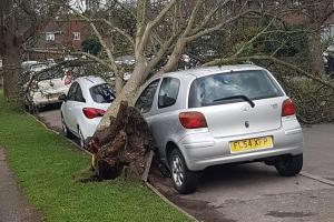 Tree falls down on two parked cars in Winchester