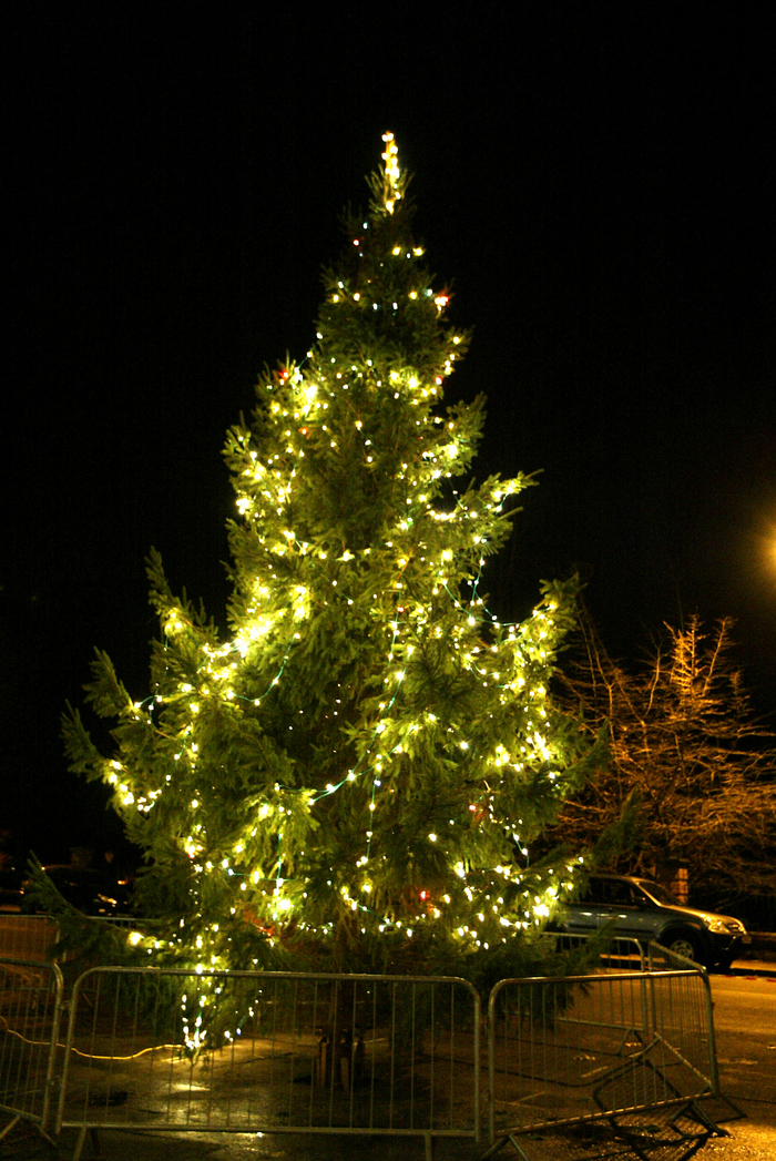 Police operation against Christmas tree thieves