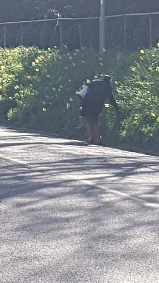 Woman spotted picking daffodils on Alresford Road PHOTO: Laura Ann Lowe/Facebook